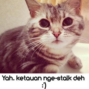 kucingketahuan